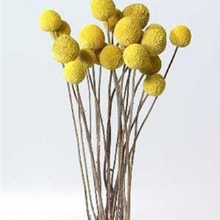 Diy billy buttons motherhood craftiness other lovely things diy billy buttons mightylinksfo